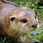 Wild otters are regularly seen from Port Beag Holiday Chalets
