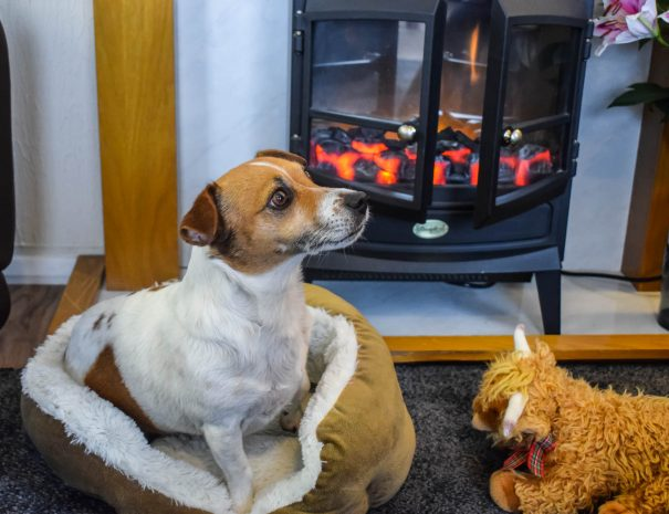 All of our accommodation is pet friendly at Port Beag Self-catering Holiday Chalets